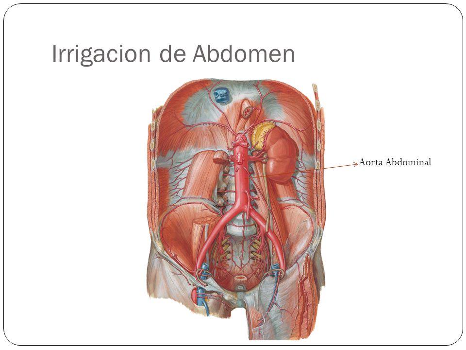 Irrigacion de Abdomen Aorta Abdominal