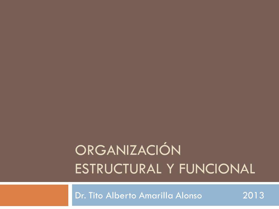 ORGANIZACIÓN ESTRUCTURAL Y FUNCIONAL Dr. Tito Alberto Amarilla Alonso2013