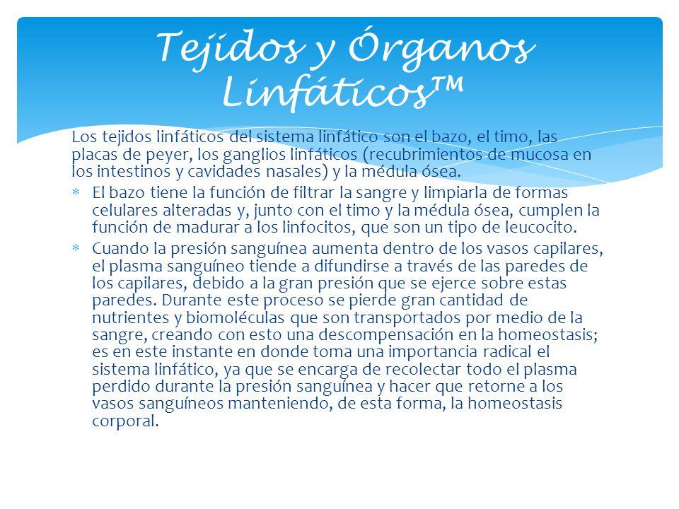 Los tejidos linfáticos del sistema linfático son el bazo, el timo, las placas de peyer, los ganglios linfáticos (recubrimientos de mucosa en los intes