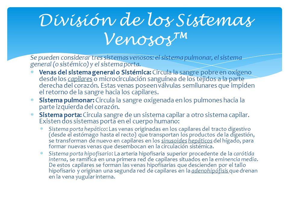 Se pueden considerar tres sistemas venosos: el sistema pulmonar, el sistema general (o sistémico) y el sistema porta. Venas del sistema general o Sist