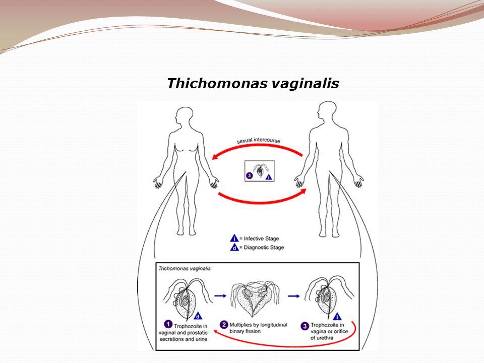 Thichomonas vaginalis