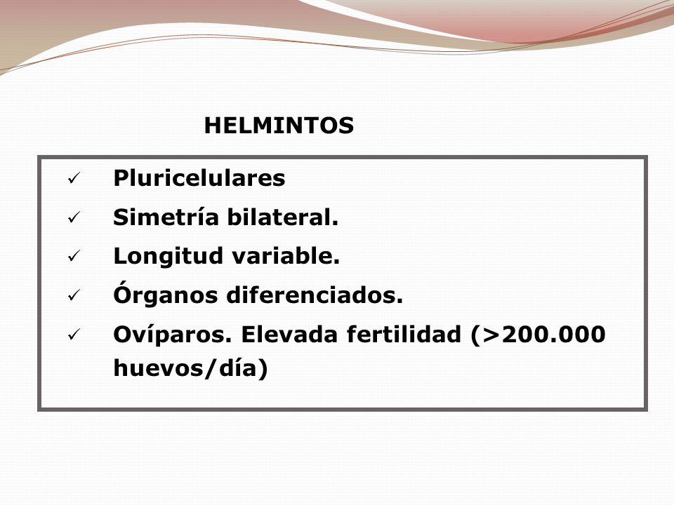 Pluricelulares Simetría bilateral. Longitud variable. Órganos diferenciados. Ovíparos. Elevada fertilidad (>200.000 huevos/día) HELMINTOS
