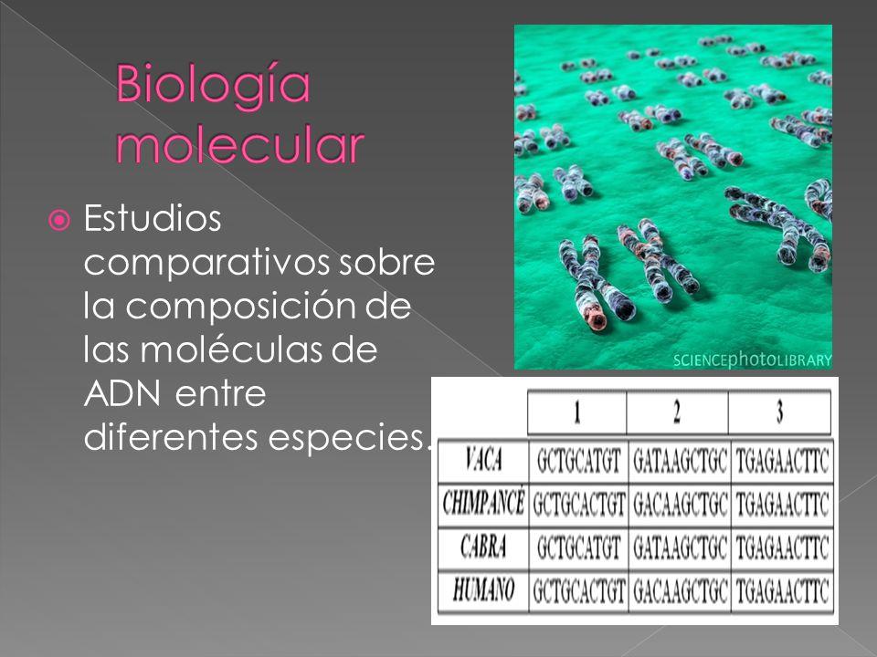 Estudios comparativos sobre la composición de las moléculas de ADN entre diferentes especies.