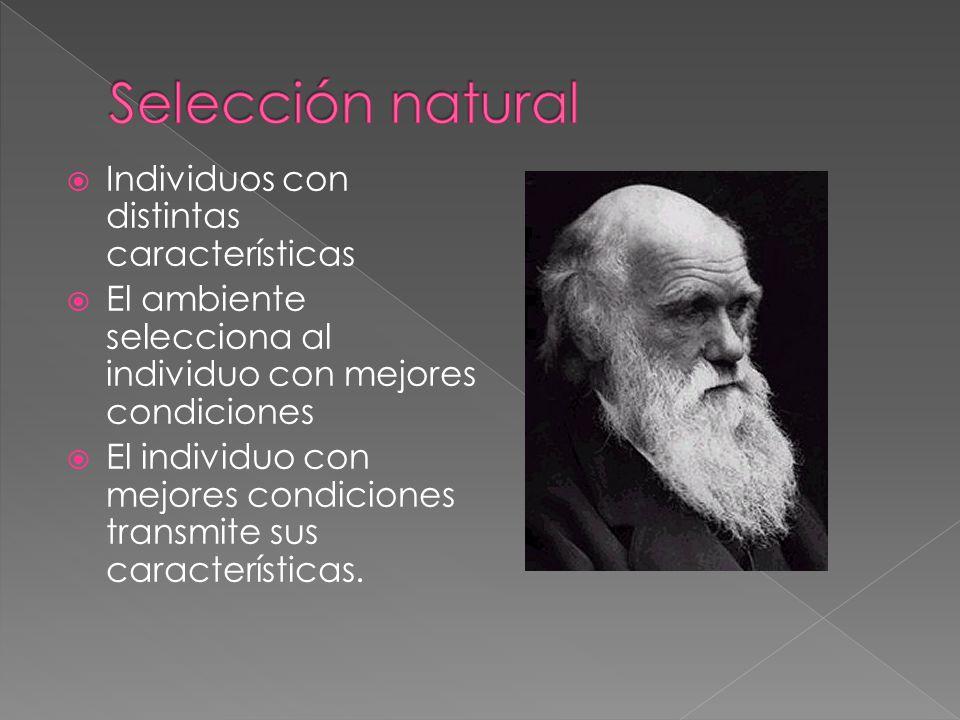 Individuos con distintas características El ambiente selecciona al individuo con mejores condiciones El individuo con mejores condiciones transmite su
