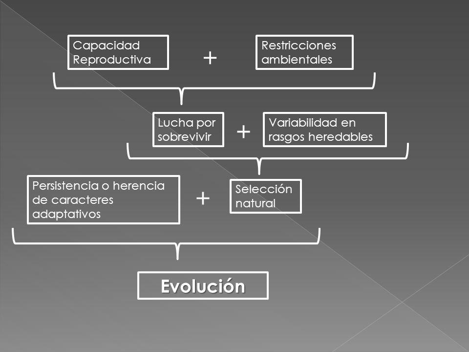 Capacidad Reproductiva Restricciones ambientales Lucha por sobrevivir Variabilidad en rasgos heredables Selección natural Persistencia o herencia de c