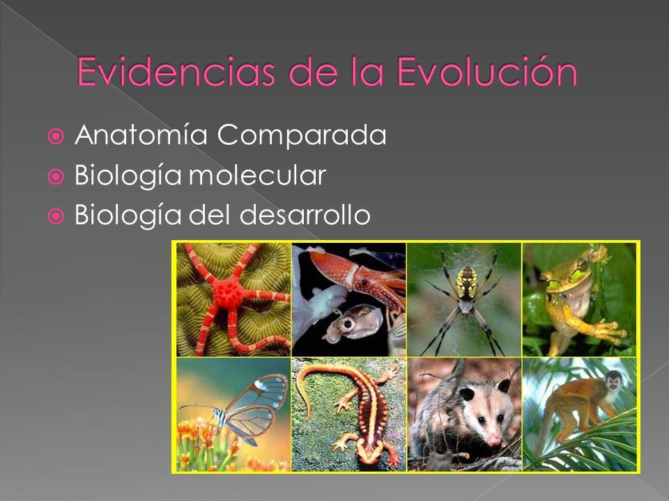 Anatomía Comparada Biología molecular Biología del desarrollo