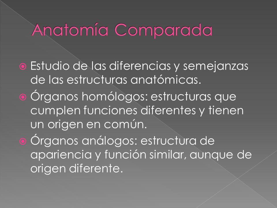 Estudio de las diferencias y semejanzas de las estructuras anatómicas. Órganos homólogos: estructuras que cumplen funciones diferentes y tienen un ori