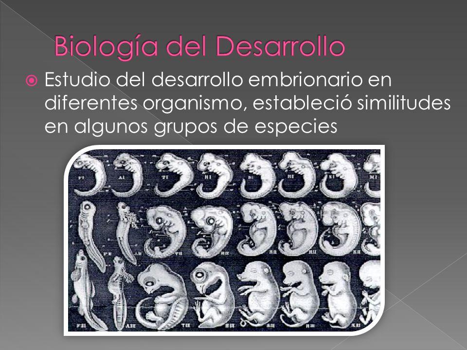 Estudio del desarrollo embrionario en diferentes organismo, estableció similitudes en algunos grupos de especies