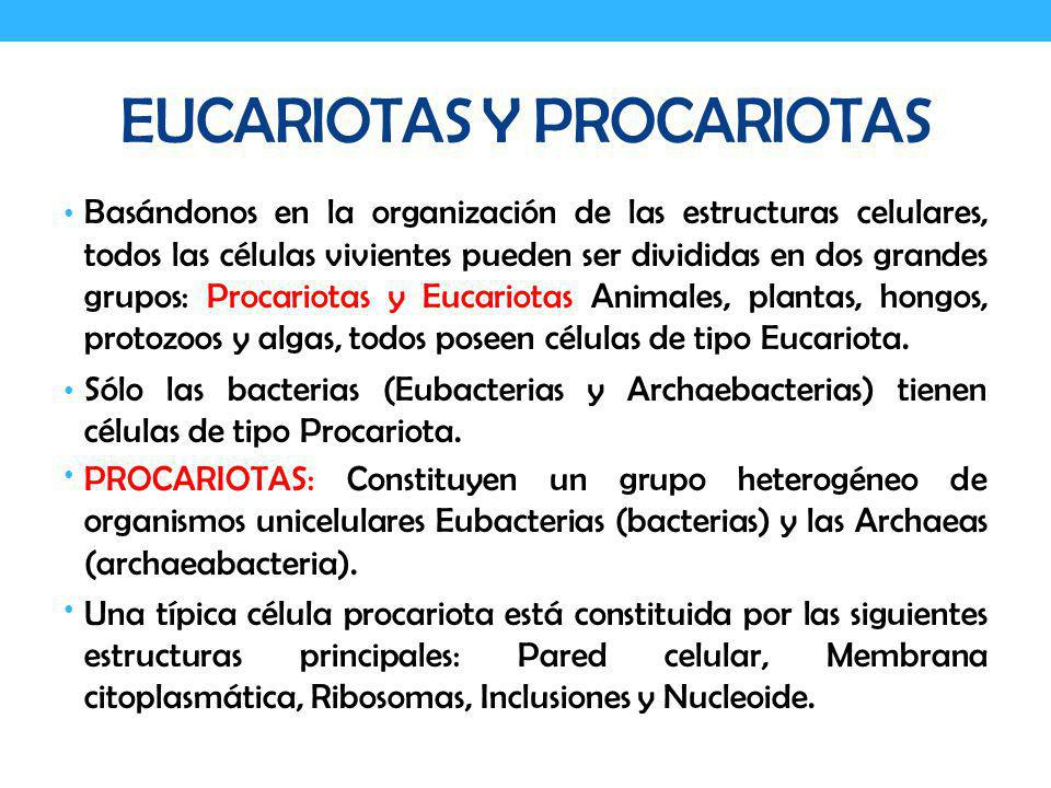EUCARIOTAS Y PROCARIOTAS EUCARIOTAS: Los organismos eucariotas incluyen algas, protozoos, hongos, plantas superiores, y animales.
