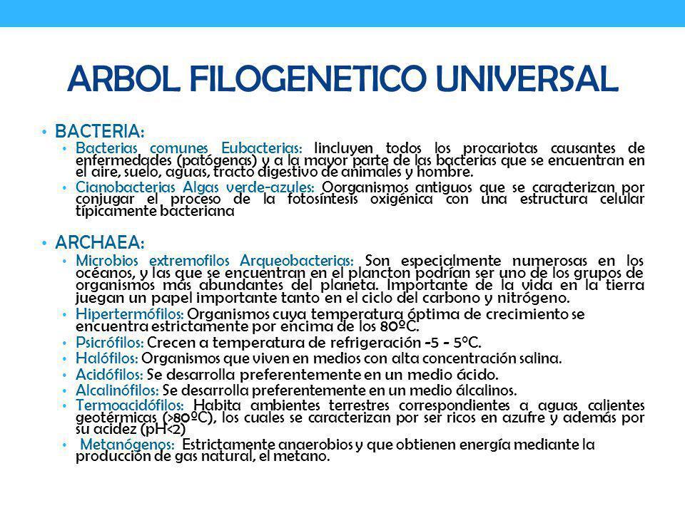 ENDOSPORAS Cuerpos vegetativos altamente resistentes.