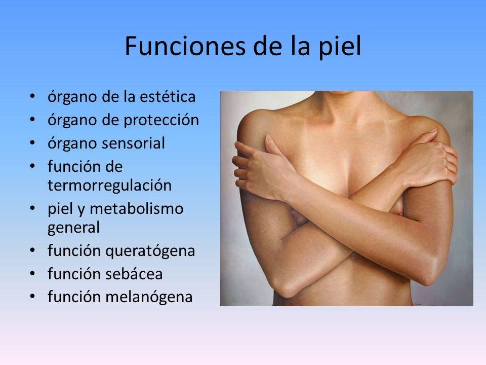 Organización de las estructuras de la piel Histológicamente esta conformada por: