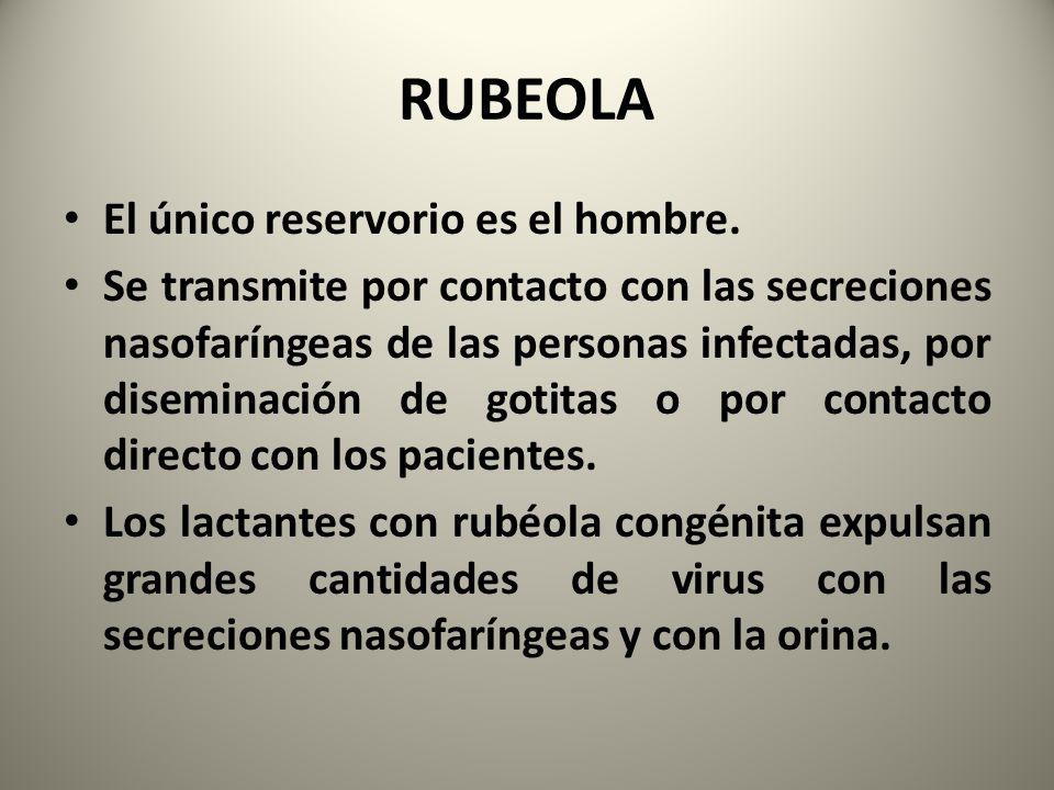 RUBEOLA El único reservorio es el hombre. Se transmite por contacto con las secreciones nasofaríngeas de las personas infectadas, por diseminación de