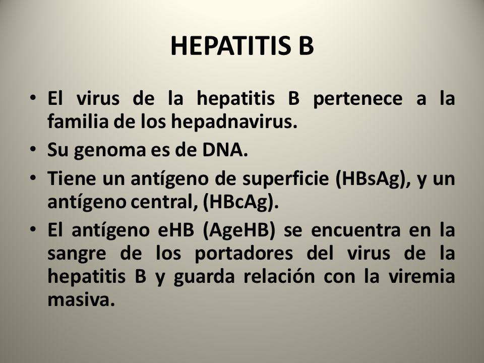 El virus de la hepatitis B pertenece a la familia de los hepadnavirus. Su genoma es de DNA. Tiene un antígeno de superficie (HBsAg), y un antígeno cen