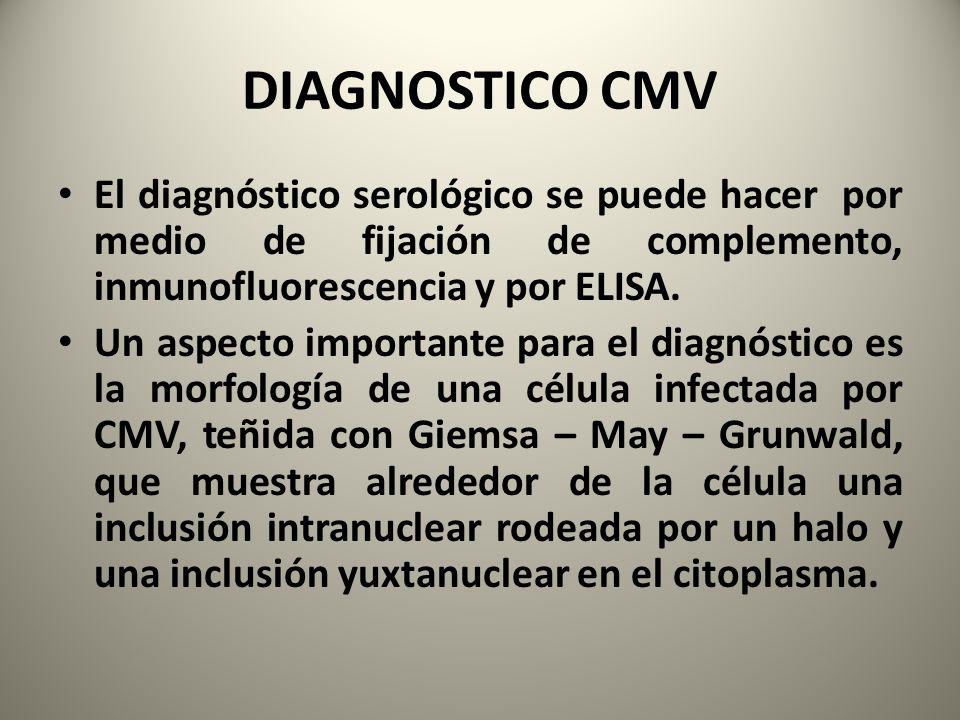 DIAGNOSTICO CMV El diagnóstico serológico se puede hacer por medio de fijación de complemento, inmunofluorescencia y por ELISA. Un aspecto importante