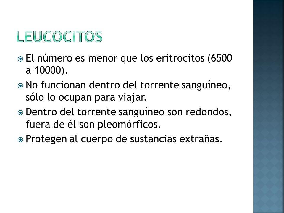 El número es menor que los eritrocitos (6500 a 10000).