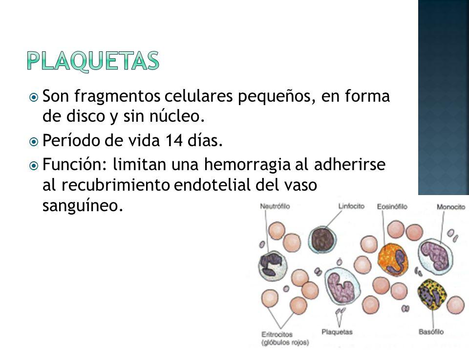 Son fragmentos celulares pequeños, en forma de disco y sin núcleo.