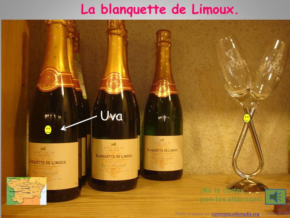 La blanquette de Limoux. ¡No te cortes : pon los altavoces! Photo trouvée sur commons.wikimedia.org (Licence CC-BY)commons.wikimedia.org