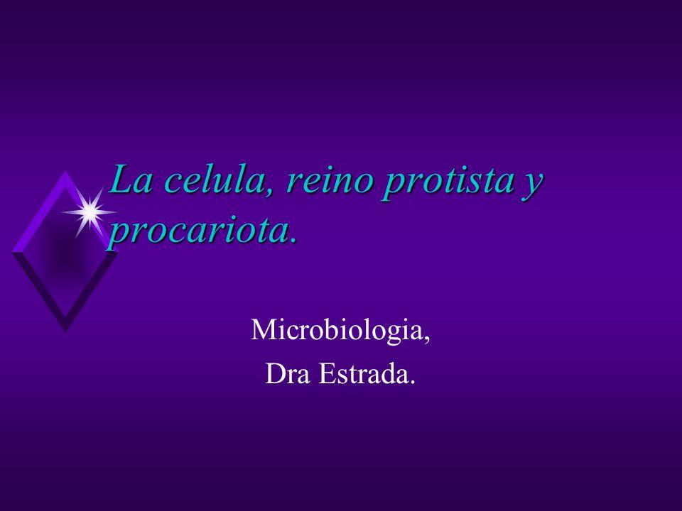 La celula, reino protista y procariota. Microbiologia, Dra Estrada.