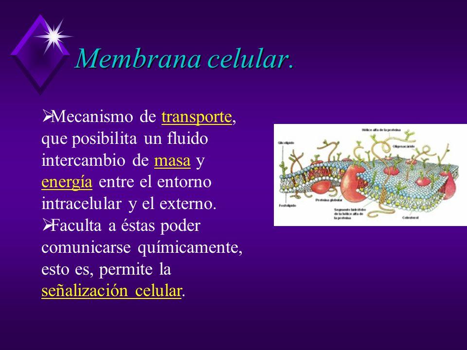 Membrana celular.