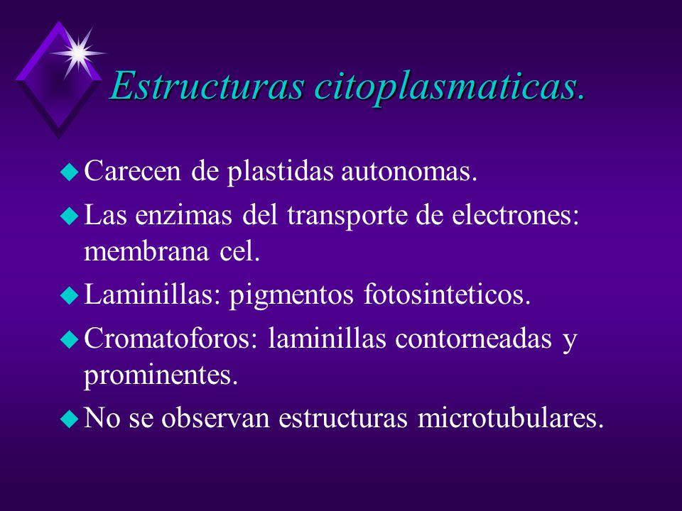Estructuras citoplasmaticas.u Carecen de plastidas autonomas.