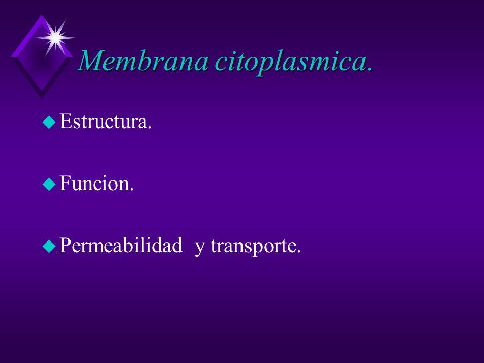 Membrana citoplasmica. u Estructura. u Funcion. u Permeabilidad y transporte.
