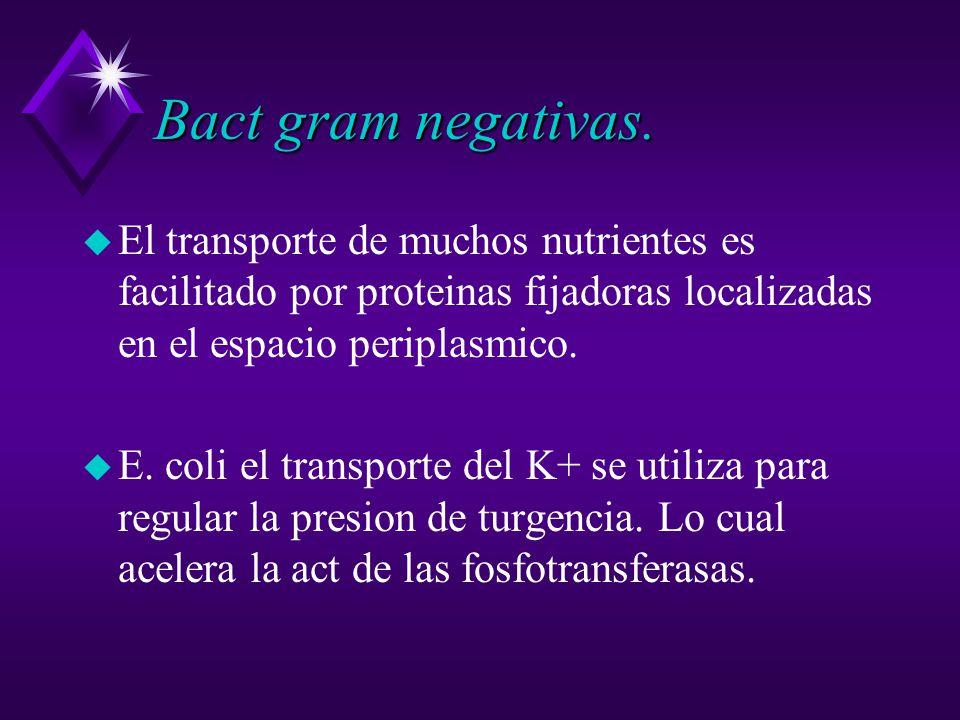 Bact gram negativas.