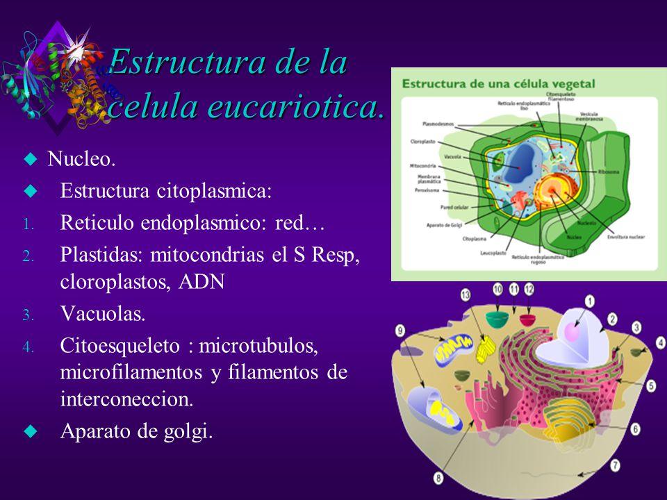 Estructura de la celula eucariotica.u Nucleo. u Estructura citoplasmica: 1.