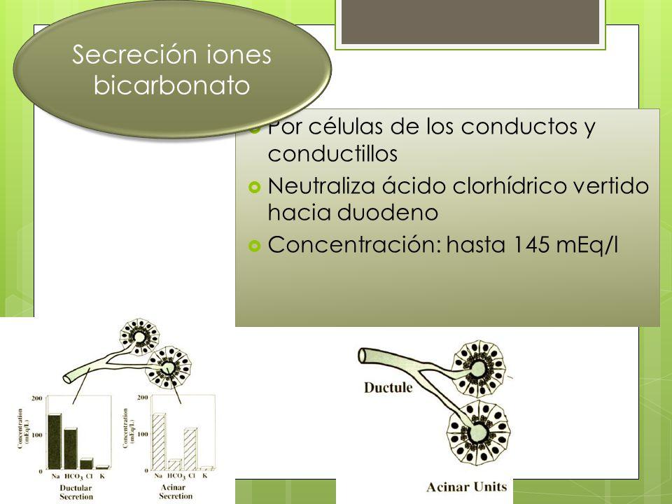 Por células de los conductos y conductillos Neutraliza ácido clorhídrico vertido hacia duodeno Concentración: hasta 145 mEq/l Secreción iones bicarbon
