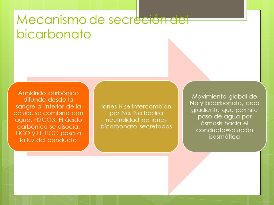 Mecanismo de secreción del bicarbonato Anhídrido carbónico difunde desde la sangre al interior de la célula, se combina con agua: H2CO3. El ácido carb