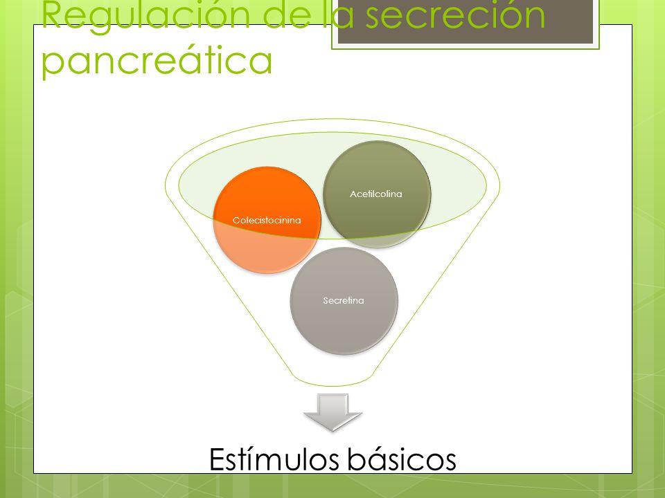 Regulación de la secreción pancreática Estímulos básicos SecretinaColecistocininaAcetilcolina