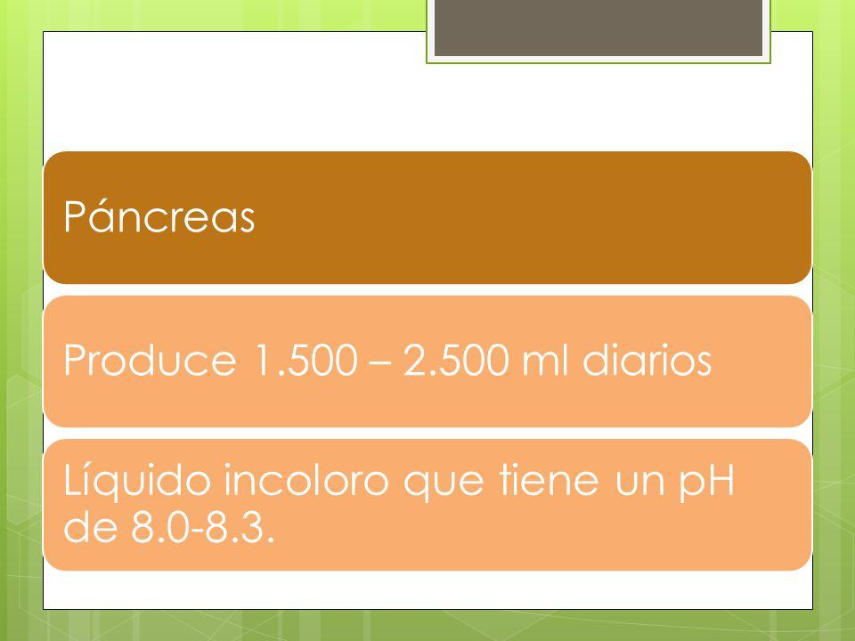 PáncreasProduce 1.500 – 2.500 ml diarios Líquido incoloro que tiene un pH de 8.0-8.3.