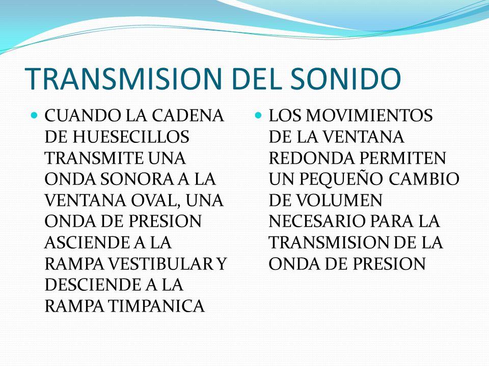 TRANSMISION DEL SONIDO CUANDO LA CADENA DE HUESECILLOS TRANSMITE UNA ONDA SONORA A LA VENTANA OVAL, UNA ONDA DE PRESION ASCIENDE A LA RAMPA VESTIBULAR