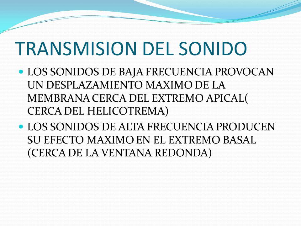 TRANSMISION DEL SONIDO LOS SONIDOS DE BAJA FRECUENCIA PROVOCAN UN DESPLAZAMIENTO MAXIMO DE LA MEMBRANA CERCA DEL EXTREMO APICAL( CERCA DEL HELICOTREMA