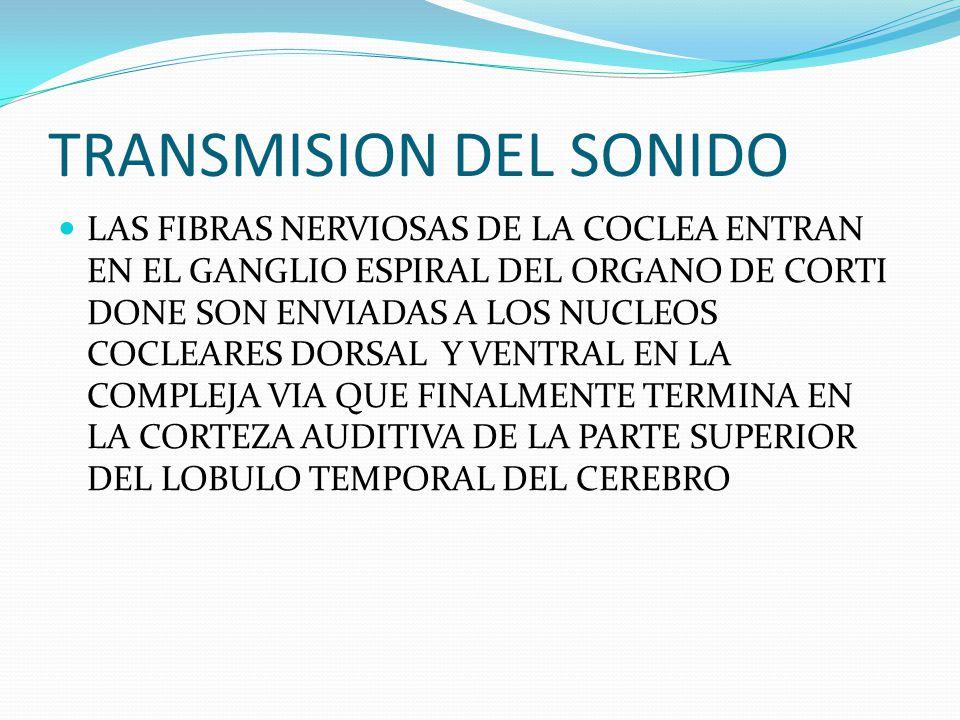 TRANSMISION DEL SONIDO LAS FIBRAS NERVIOSAS DE LA COCLEA ENTRAN EN EL GANGLIO ESPIRAL DEL ORGANO DE CORTI DONE SON ENVIADAS A LOS NUCLEOS COCLEARES DO