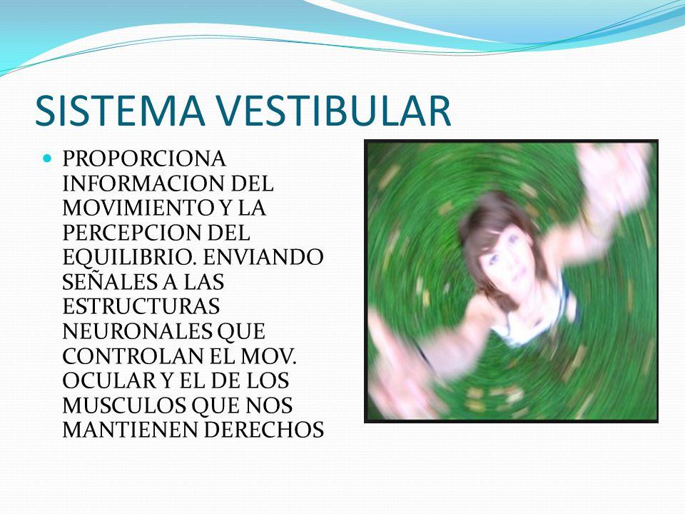 SISTEMA VESTIBULAR PROPORCIONA INFORMACION DEL MOVIMIENTO Y LA PERCEPCION DEL EQUILIBRIO. ENVIANDO SEÑALES A LAS ESTRUCTURAS NEURONALES QUE CONTROLAN
