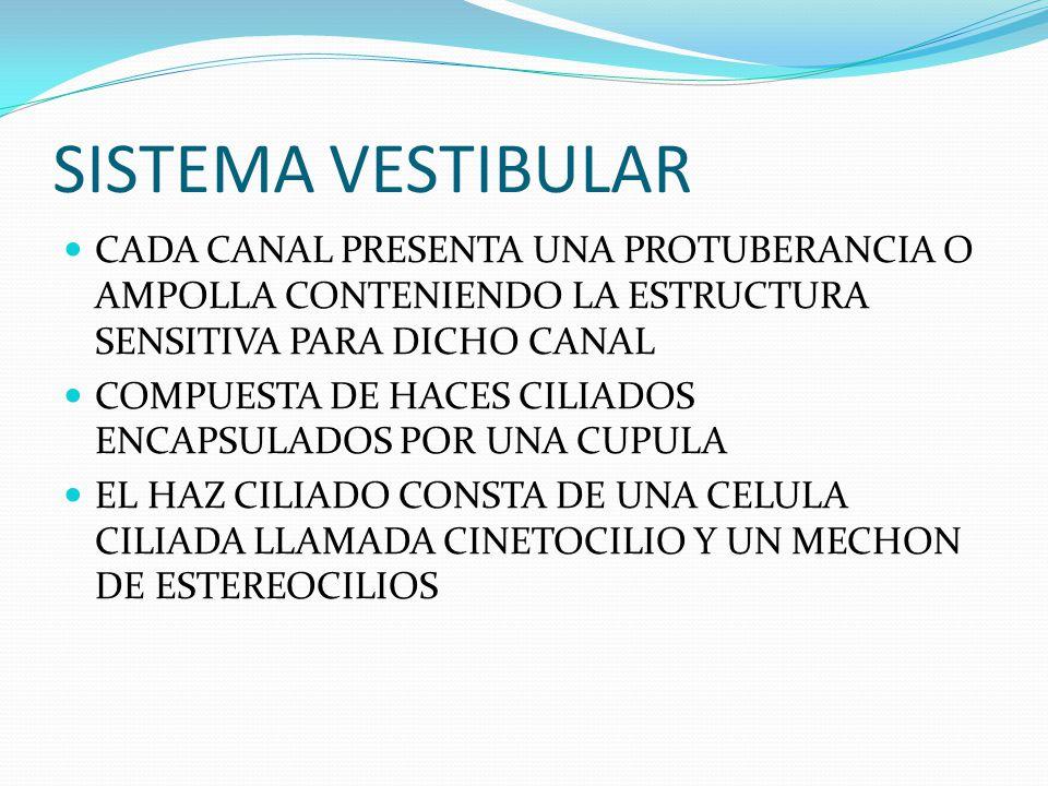 SISTEMA VESTIBULAR CADA CANAL PRESENTA UNA PROTUBERANCIA O AMPOLLA CONTENIENDO LA ESTRUCTURA SENSITIVA PARA DICHO CANAL COMPUESTA DE HACES CILIADOS EN