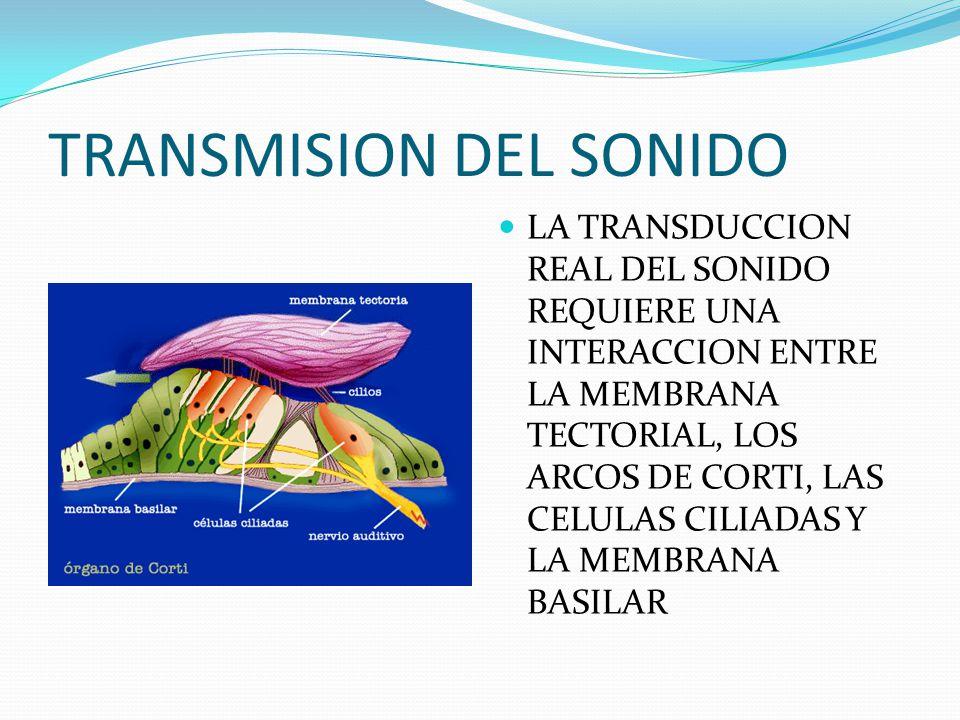 TRANSMISION DEL SONIDO LA TRANSDUCCION REAL DEL SONIDO REQUIERE UNA INTERACCION ENTRE LA MEMBRANA TECTORIAL, LOS ARCOS DE CORTI, LAS CELULAS CILIADAS