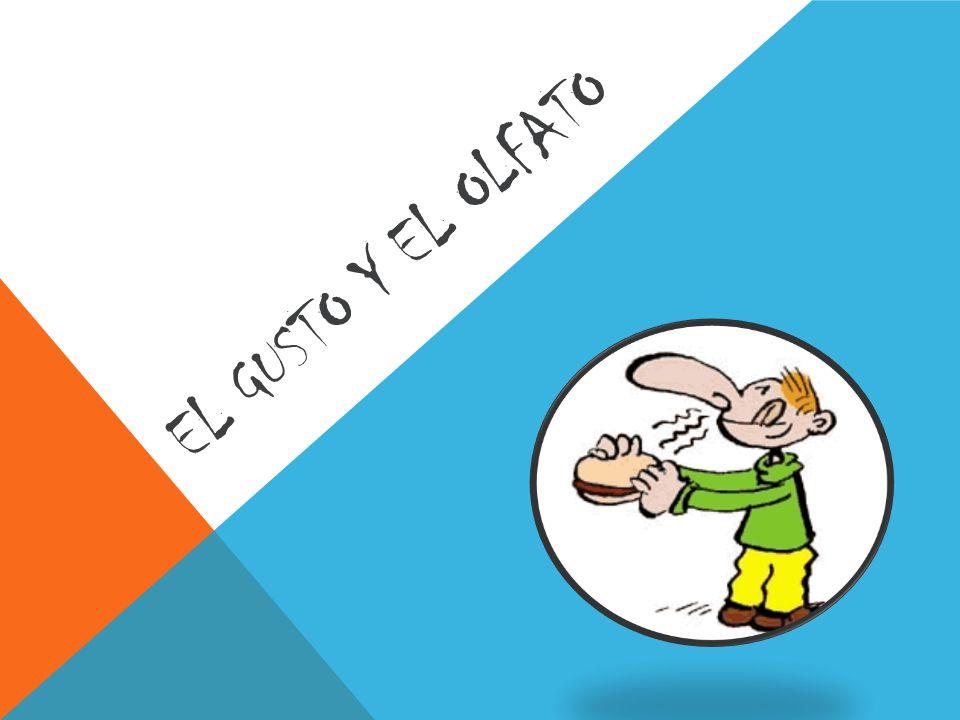 EL GUSTO Y EL OLFATO