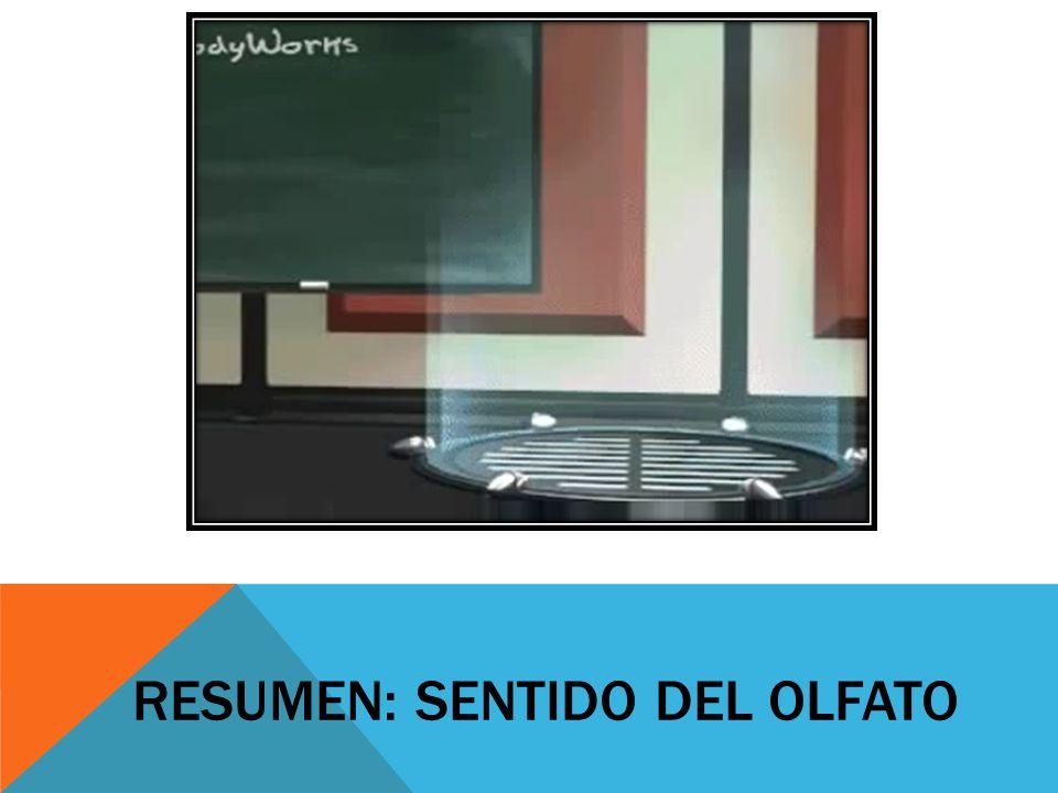 RESUMEN: SENTIDO DEL OLFATO