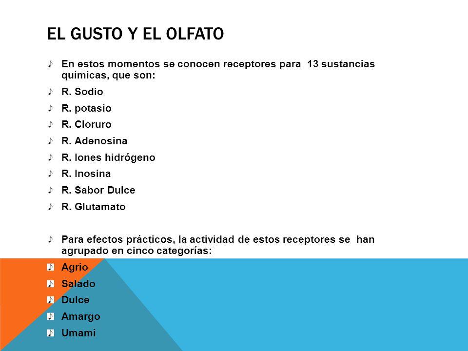 EL GUSTO Y EL OLFATO En estos momentos se conocen receptores para 13 sustancias químicas, que son: R. Sodio R. potasio R. Cloruro R. Adenosina R. Ione
