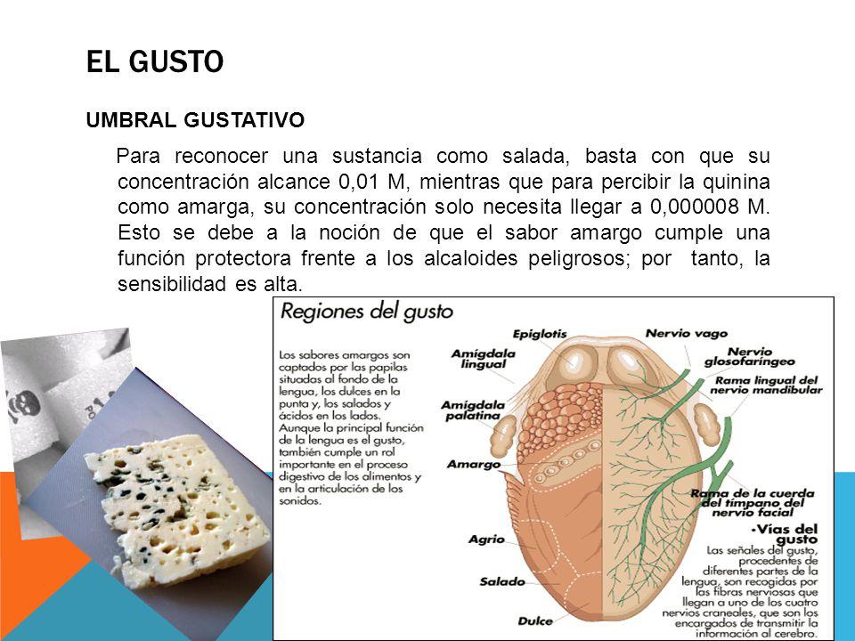 UMBRAL GUSTATIVO Para reconocer una sustancia como salada, basta con que su concentración alcance 0,01 M, mientras que para percibir la quinina como a
