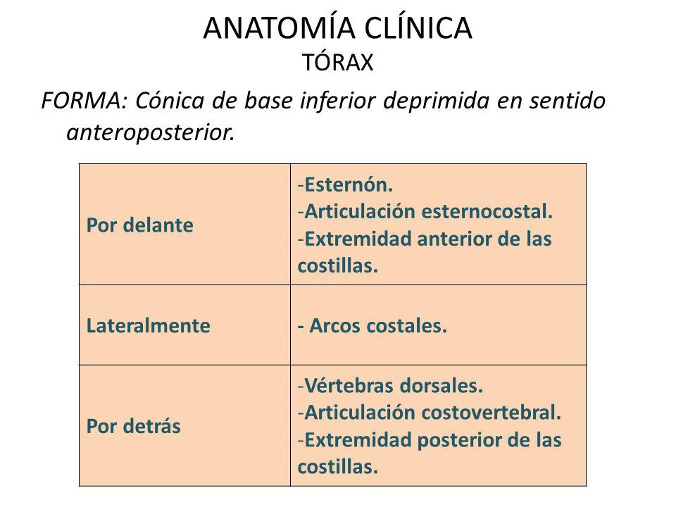 ANATOMÍA CLÍNICA TÓRAX FORMA: Cónica de base inferior deprimida en sentido anteroposterior. Por delante -Esternón. -Articulación esternocostal. -Extre