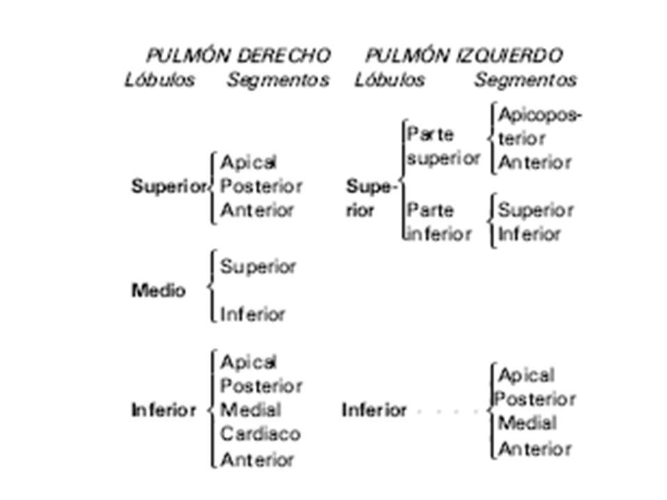 EXPLORACIÓN SE CONSIDERA EN TRES PARTES: Anterior: 1.Fosa supraclavicular.
