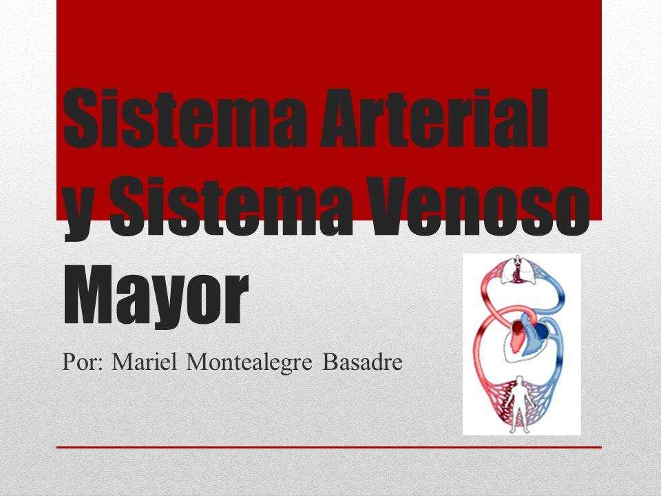 Sistema Arterial y Sistema Venoso Mayor Por: Mariel Montealegre Basadre