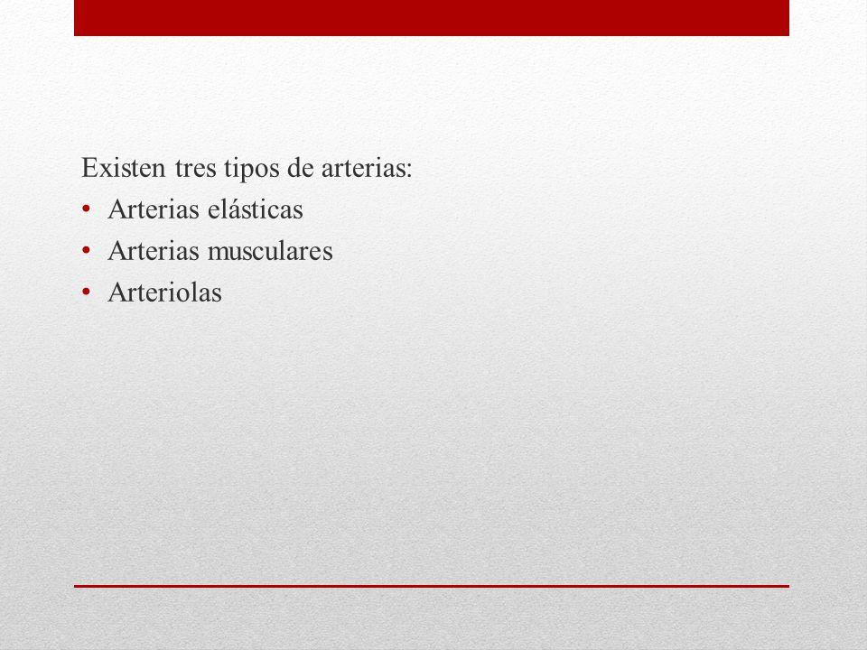 Existen tres tipos de arterias: Arterias elásticas Arterias musculares Arteriolas