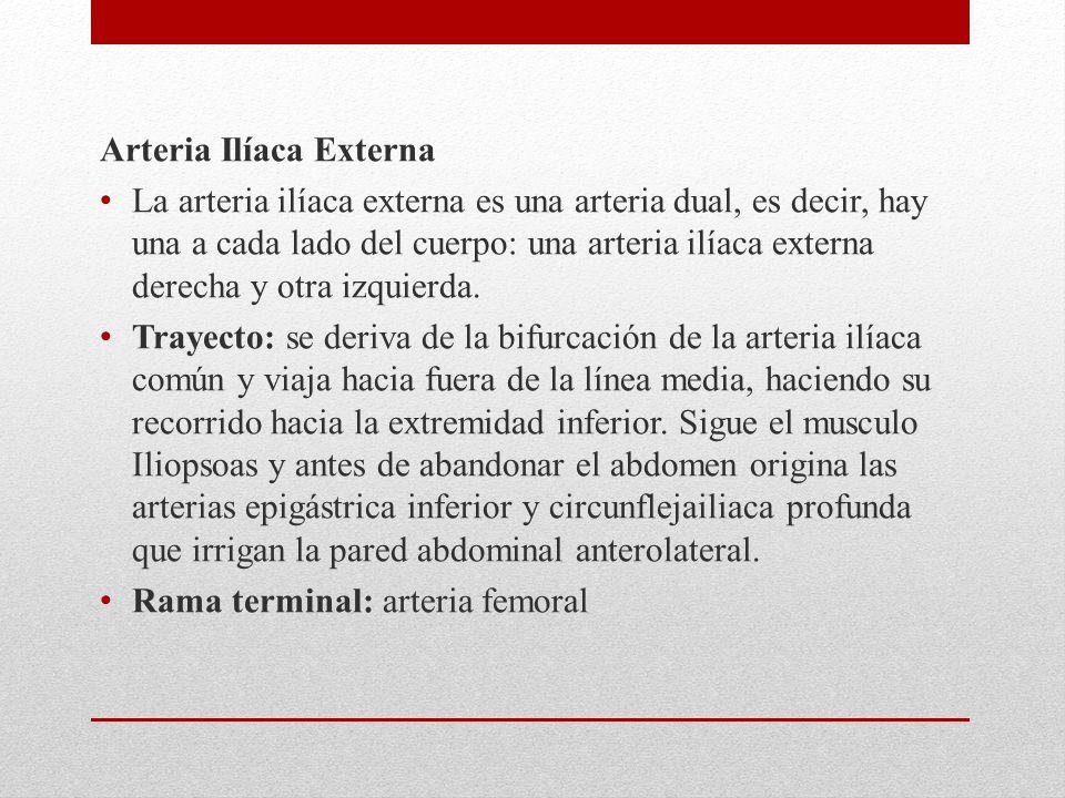 Arteria Ilíaca Externa La arteria ilíaca externa es una arteria dual, es decir, hay una a cada lado del cuerpo: una arteria ilíaca externa derecha y o