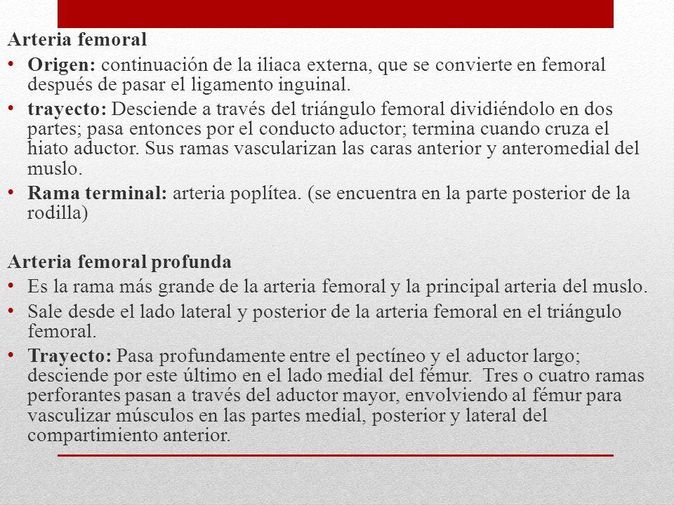 Arteria femoral Origen: continuación de la iliaca externa, que se convierte en femoral después de pasar el ligamento inguinal. trayecto: Desciende a t