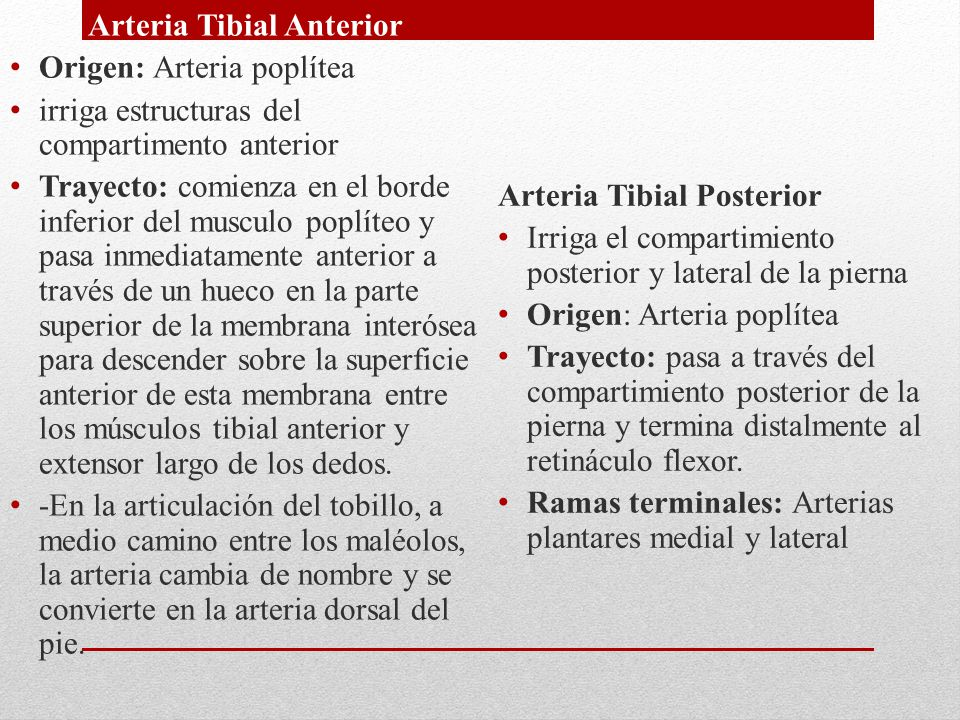 Arteria Tibial Anterior Origen: Arteria poplítea irriga estructuras del compartimento anterior Trayecto: comienza en el borde inferior del musculo pop