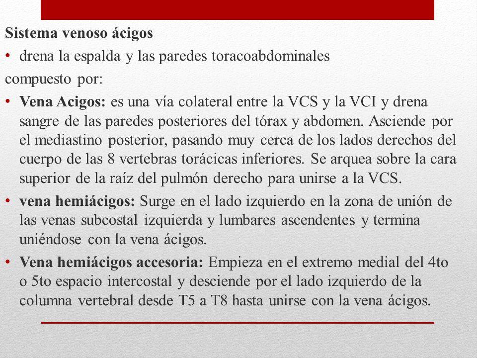 Sistema venoso ácigos drena la espalda y las paredes toracoabdominales compuesto por: Vena Acigos: es una vía colateral entre la VCS y la VCI y drena sangre de las paredes posteriores del tórax y abdomen.
