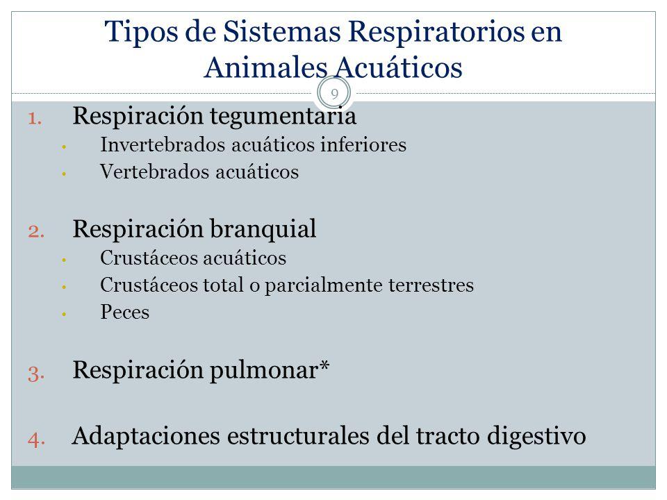 Respiración Tegumentaria en Invertebrados Inferiores 10 Difusión a través de la superficie corporal o por las paredes del sistema gastrovascular Renovación del medio por movimiento del cuerpo en su totalidad o por cilios o flagelos